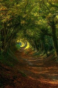 tunnel through trees