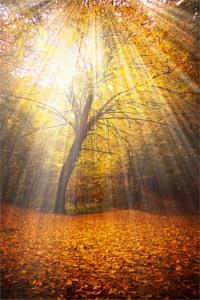 tree of revelation