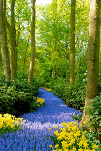 Blue-Path-Keukenhof-Gardens-Netherlands