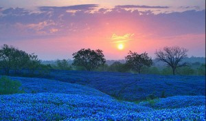 cropped-bluebonnet-field-in-ellis-county-texas-e1438027025174.jpg