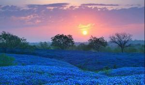 cropped-bluebonnet-field-in-ellis-county-texas-e1438027025174.jpg