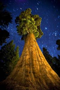 Night-view-with-stars-Sequoia-National-Park-California.